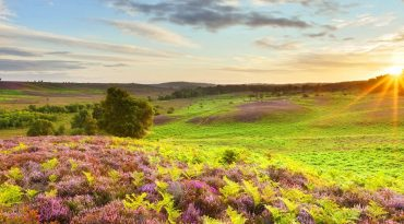 hampshire-england-landscape